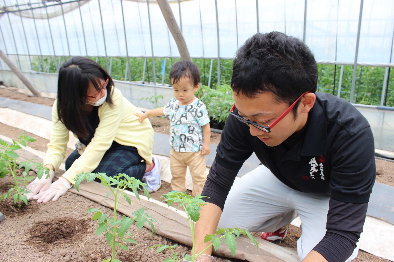 トマト定植体験1