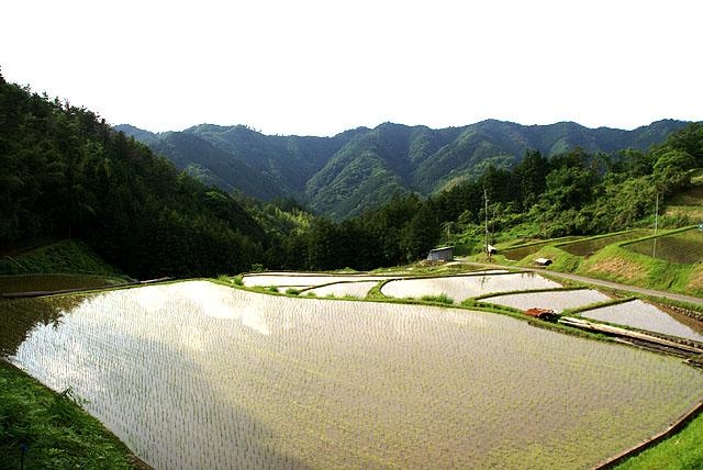 柳沢地区の棚田