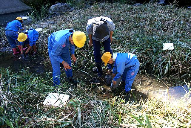 水生生物調査ー河川にて採集活動